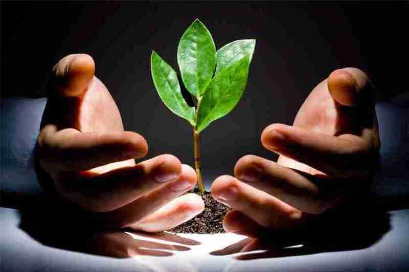 قيادي وفدي يُطالب بضرورة وجود إستراتيجية للاقتصاد الأخضر في مصر
