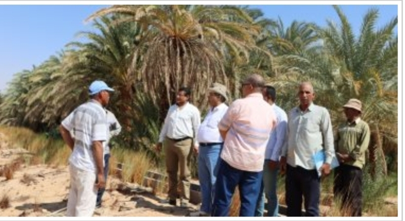 وزارة الزراعة تواصل متابعة تنفيذ مشروع التنمية المستدامة بالوادي الجديد