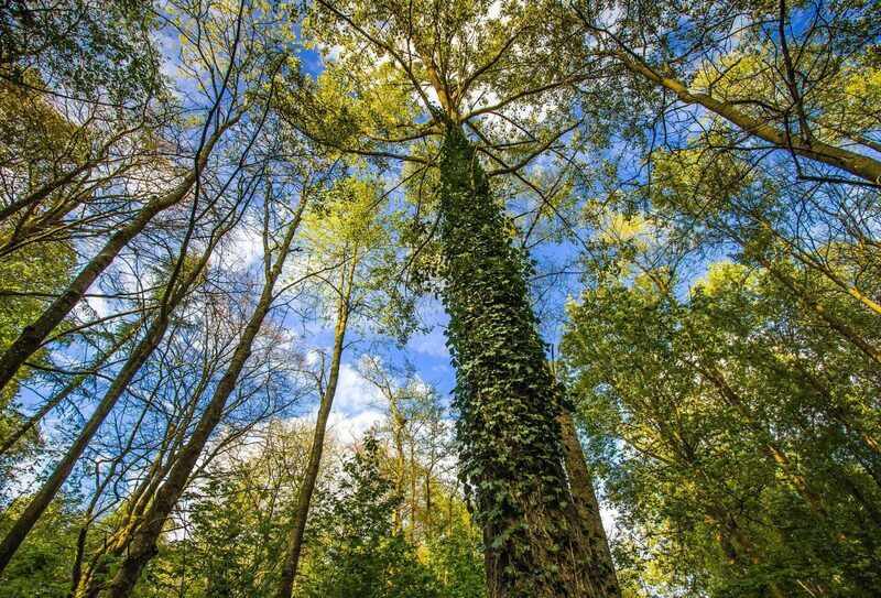 50 projects win share of £10 m fund for planting 84,000 trees across UK