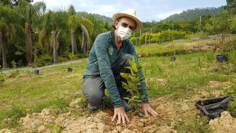 Initiative for planting 200,000 trees in Brazil until June 2021