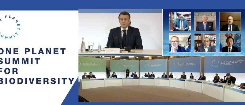 AfDB, EIB, AFD pledge billions to Africa's Green Wall Initiative