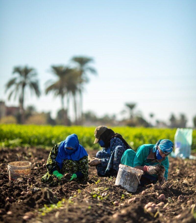 «بيبسيكو»: نستهدف تحسين المعيشة لـ 250 ألف شخص بنظام زراعي مستدام